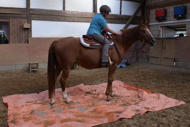 pferde nach krankheit richtig antrainieren