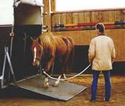 früher pferderasse für königshäuser