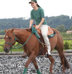 wirkung gebiss pferd